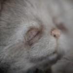 Котенок Тедди от Марики Шмидт