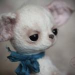 Щенок чихуахуа тедди от Марики Шмидт