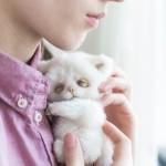 Видео курс котенок тедди